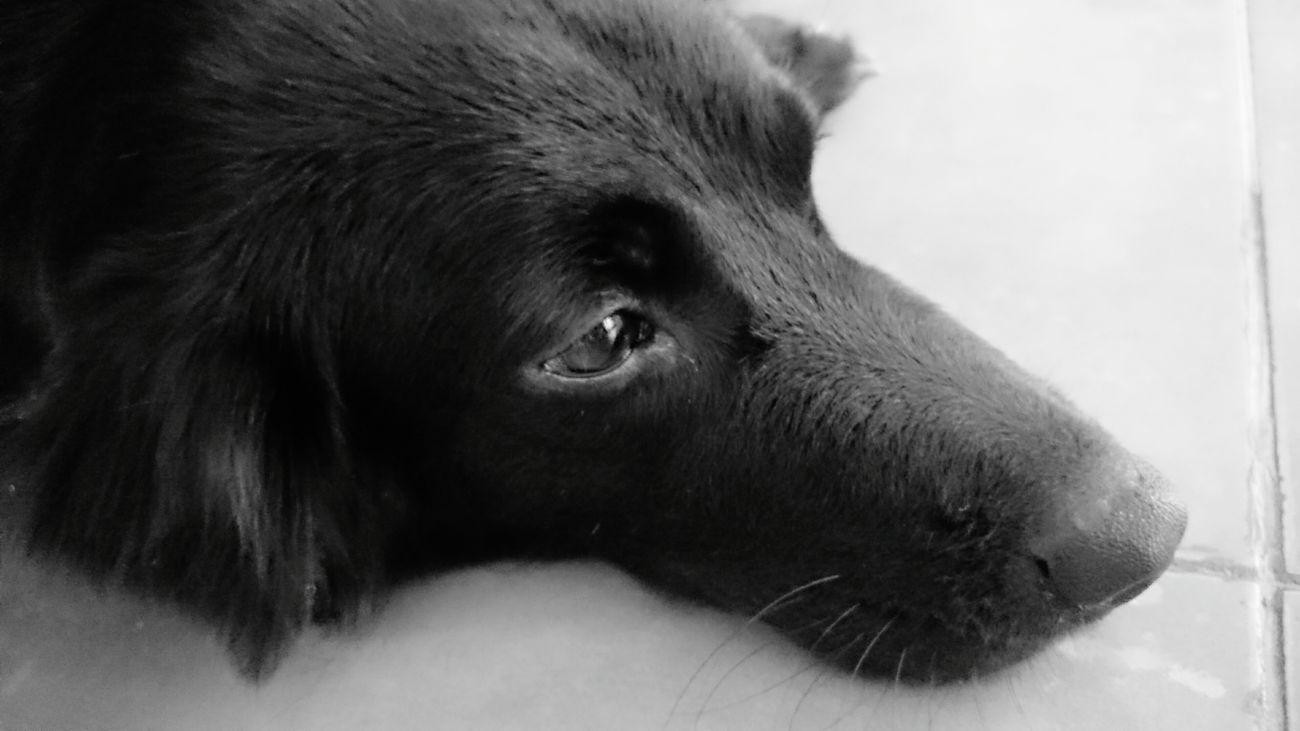 Dogs Of EyeEm Dog Hello World Ilovemydog Kintamani Dog Weeko Ilovebalidog Black And White Black Dog