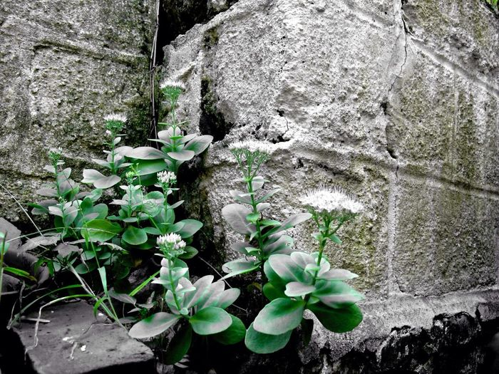 Cement Wall Brooklyn Yard Park Slope, Brooklyn No People Day Close-up Full Frame High Angle View Outdoors White Background Leaf Nature Plant Close Up Focus On Background Elevated View Textured  Growing Rough Change Growth Broken TakeoverContrast