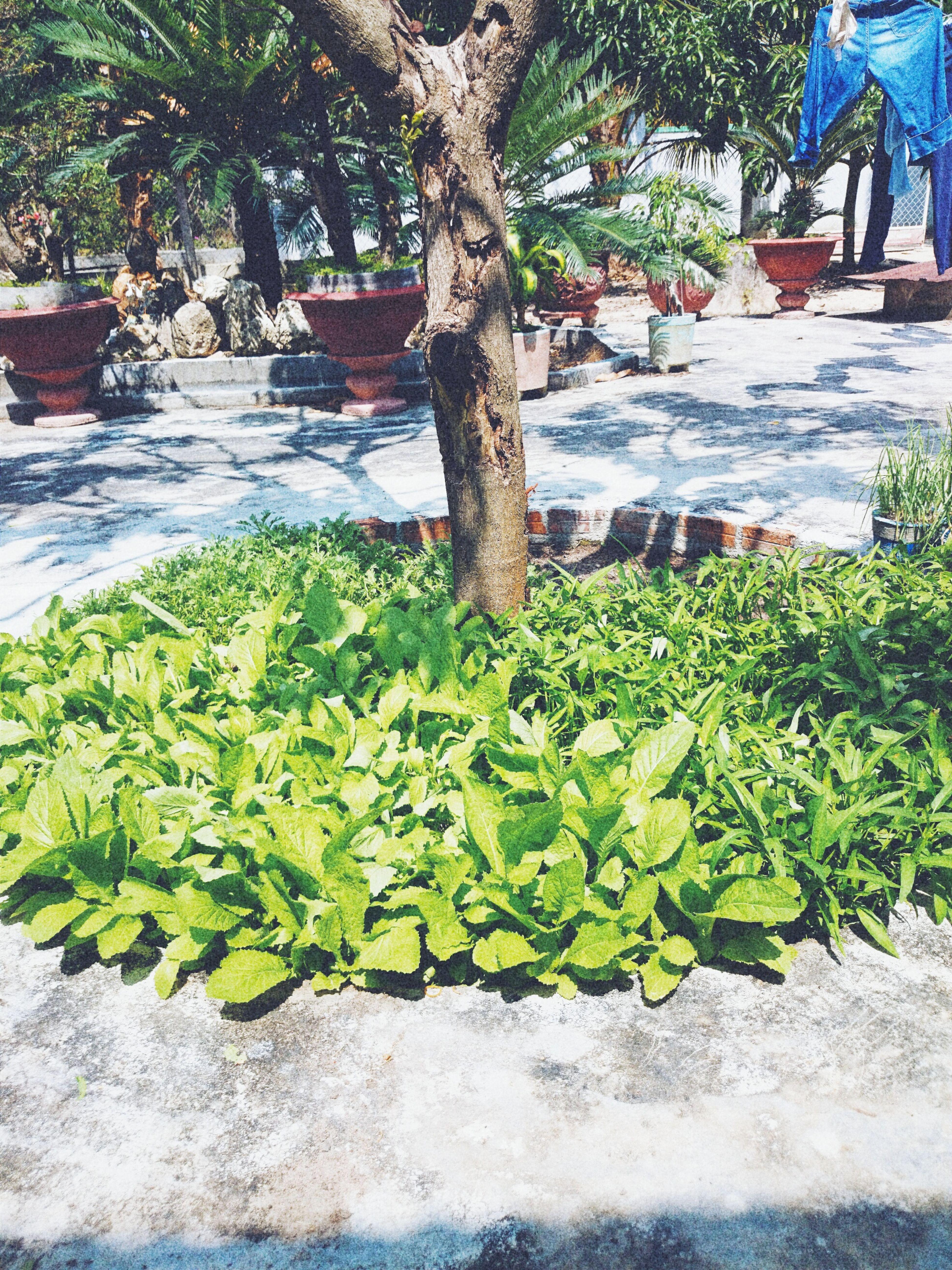 Garden vegestables