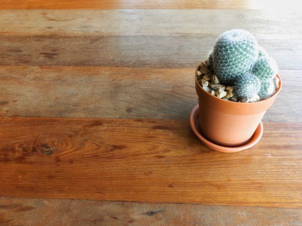 Wood - Material Table Flower Head Indoors  Design Decoration Garden Pot Cactus Flower Flower