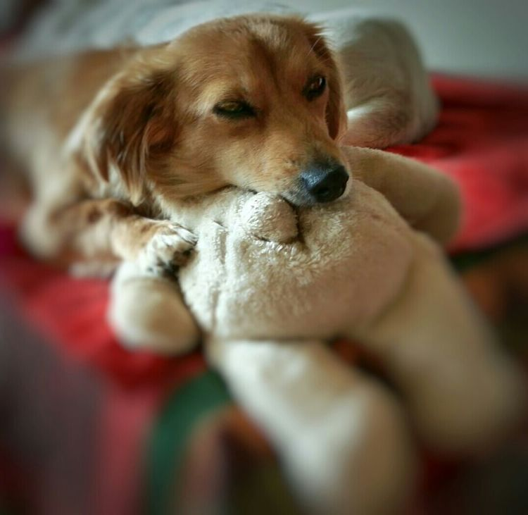 SweetSallywishes you a Happy Weekend !!! Thanksgoditsfriday My Dogs Are Cooler Than Your Kids EyeEm Best Shots Dogs AntiM