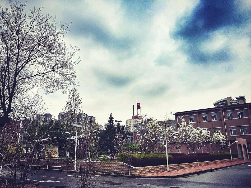 My school ❤️ Schol