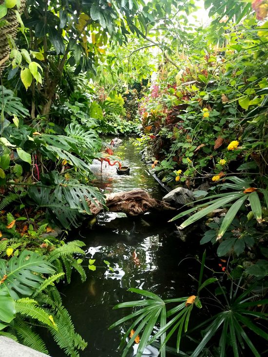 Outdoors Stream Lush Foliage Rainforest Water Tree Plant Branch Tranquil Scene Nature Beauty In Nature Flamingo Koi Pond Koi Fish