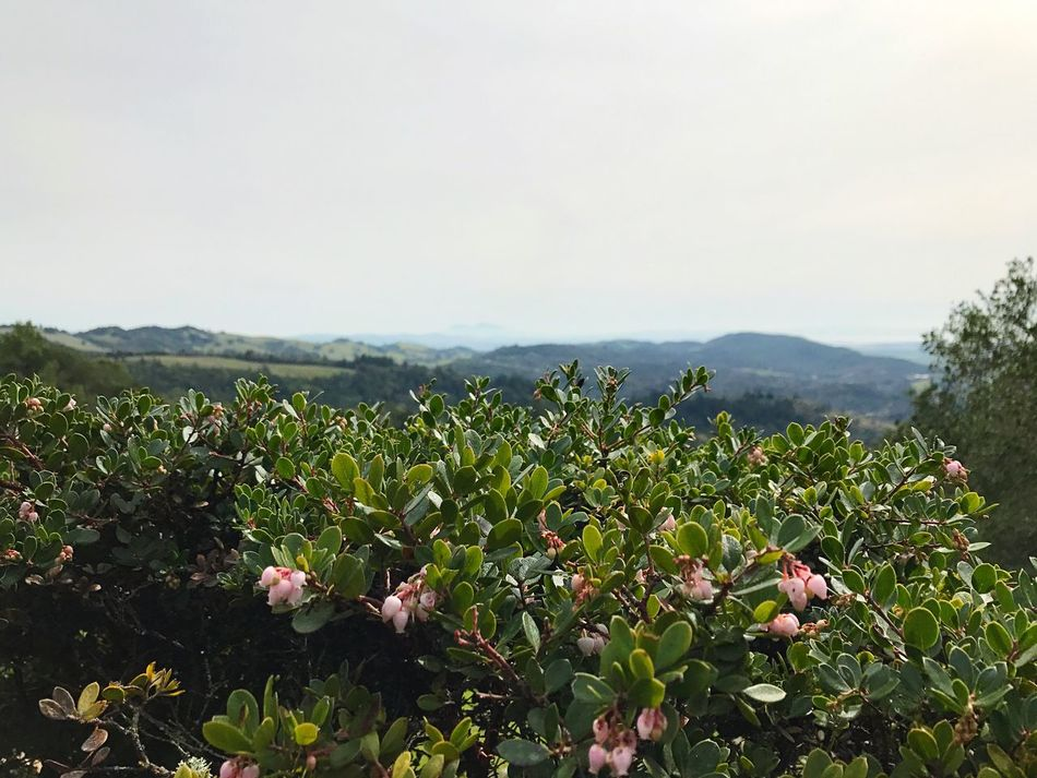 Growth Nature Agriculture Landscape Beauty In Nature Tree Plant Rural Scene Green Color Field Leaf Mountain Outdoors No People Scenics Day Freshness Sky Manzanita Arctostaphylos Open Edit