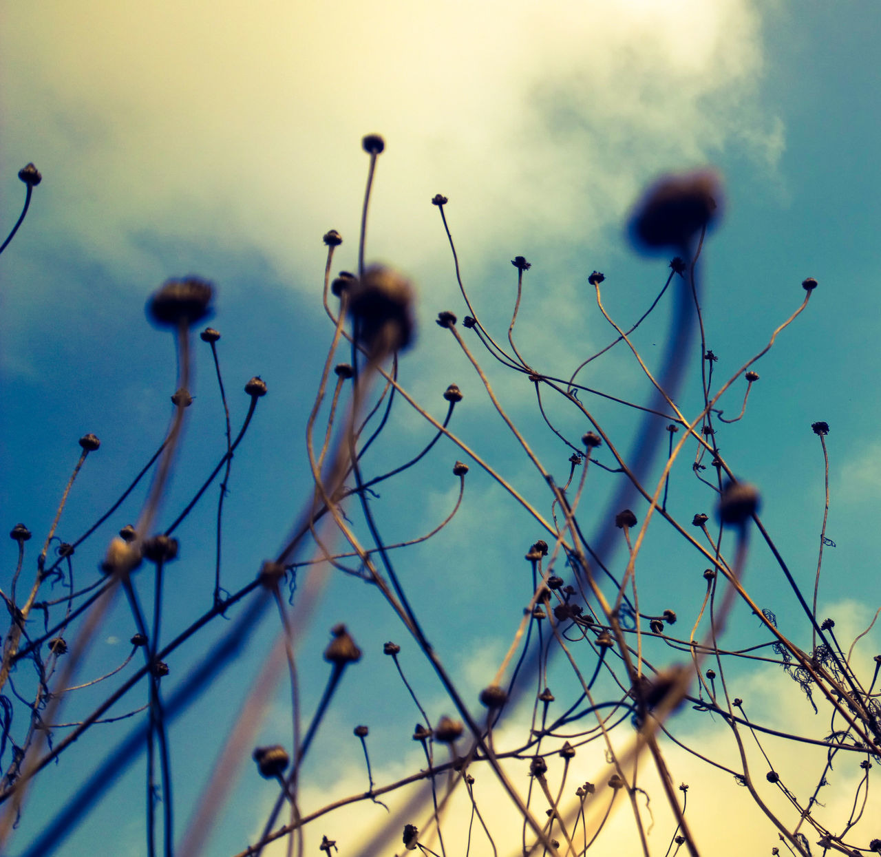 plant, nature, growth, no people, outdoors, beauty in nature, flower, day, close-up, fragility, sky, freshness