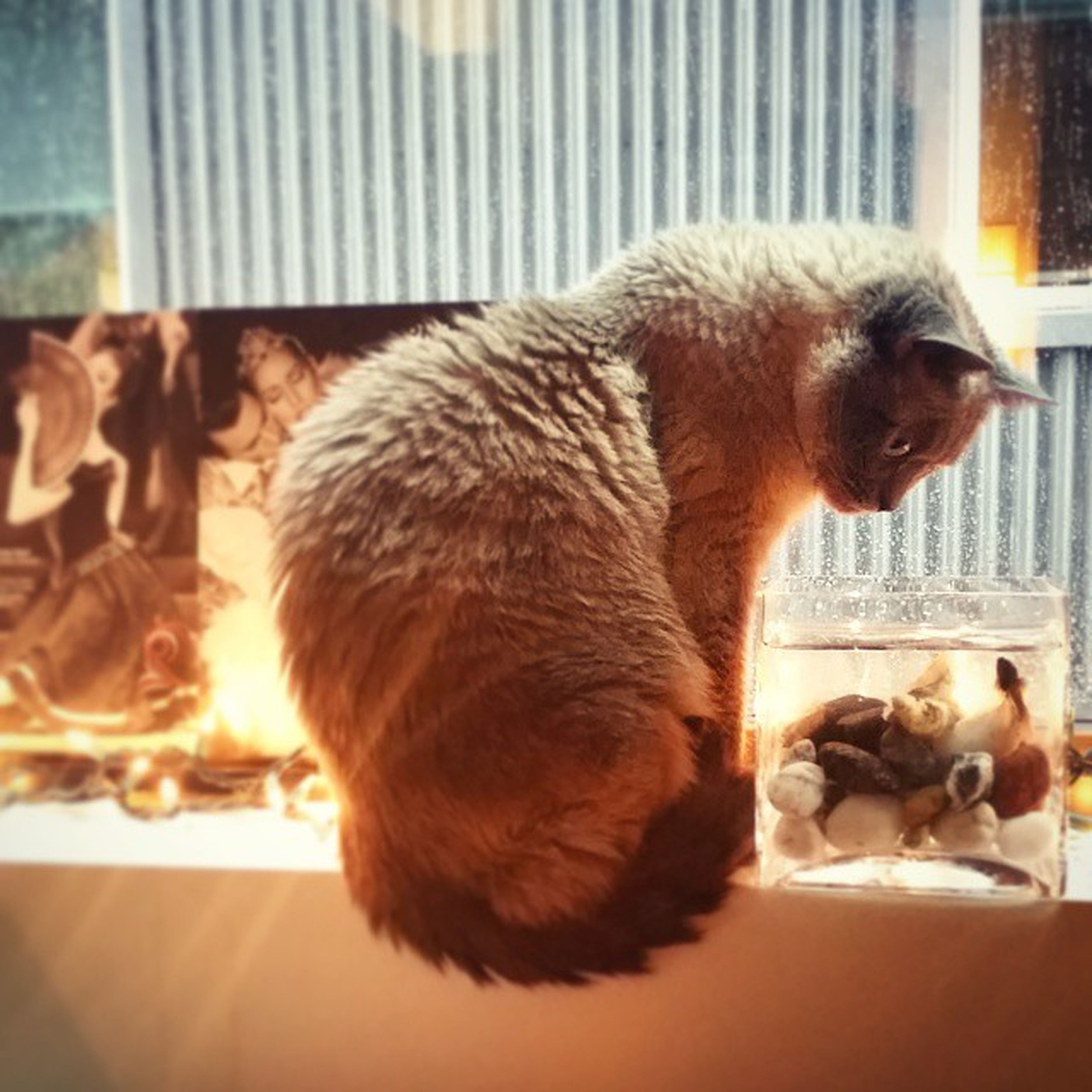animal themes, indoors, domestic animals, mammal, pets, one animal, glass - material, window, sitting, home interior, relaxation, transparent, domestic cat, dog, close-up, focus on foreground, brown, table, day, reflection