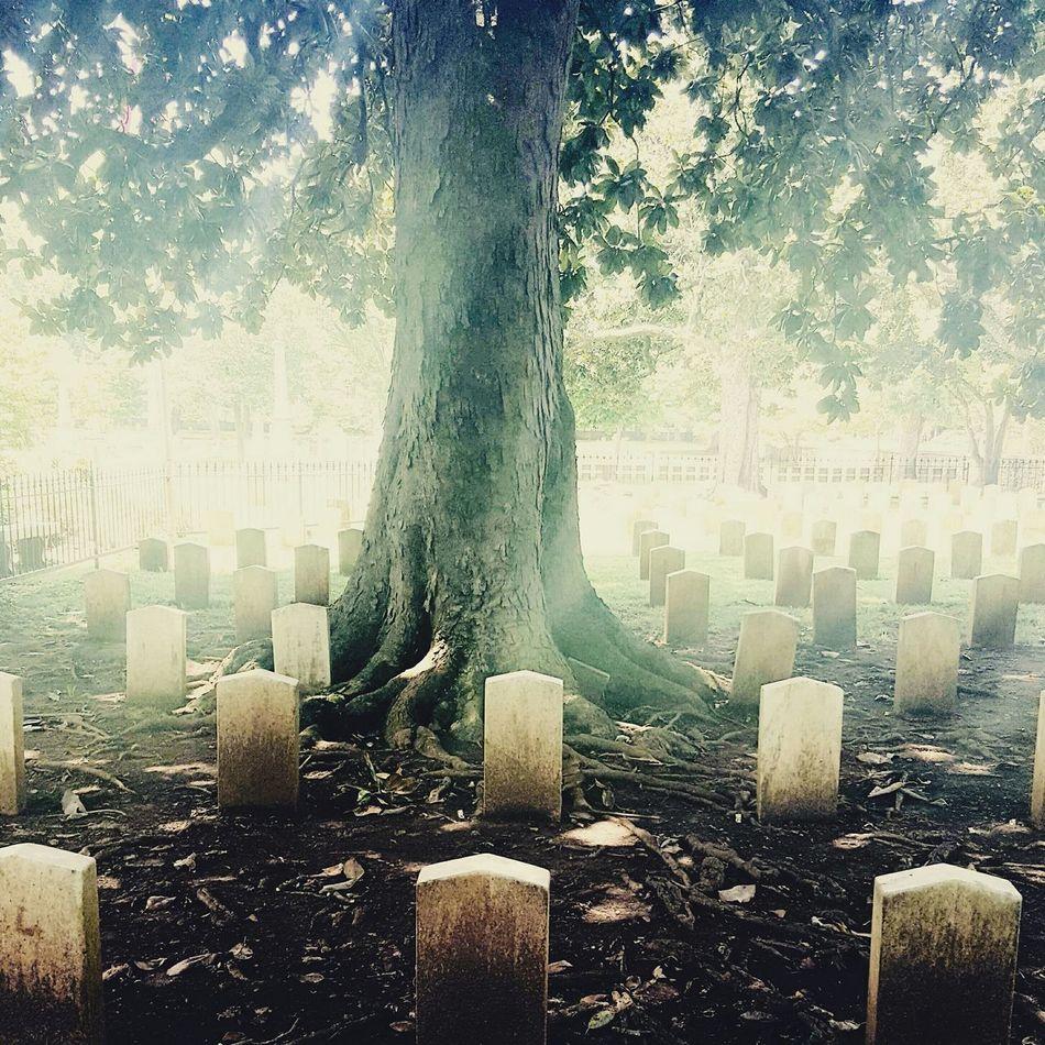 Graveyard Beauty Graveyard Collection Maple Hill