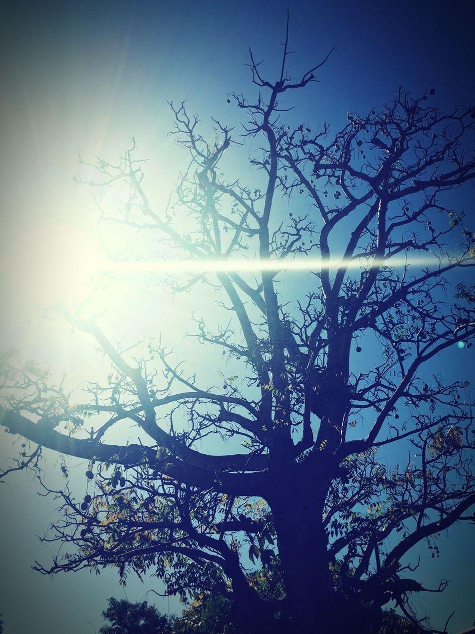 V apple tree . Waimea Canyon Kauai♡ 808  Kauaiwestside