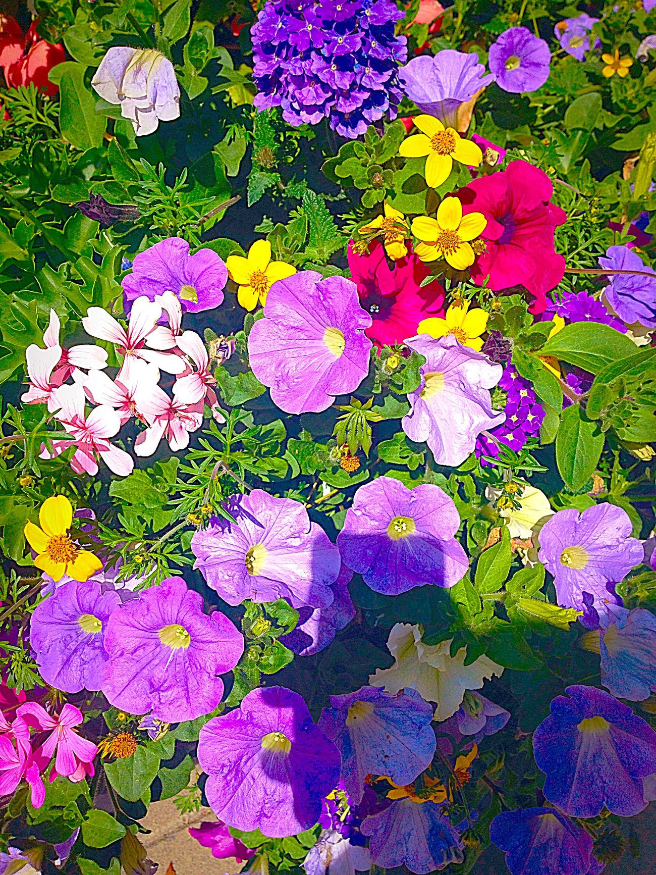 Purple Yellow Red Green Flowers Eye4photography  EyeEm Nature Lover Cute So Many Colors EyeEmBestPics