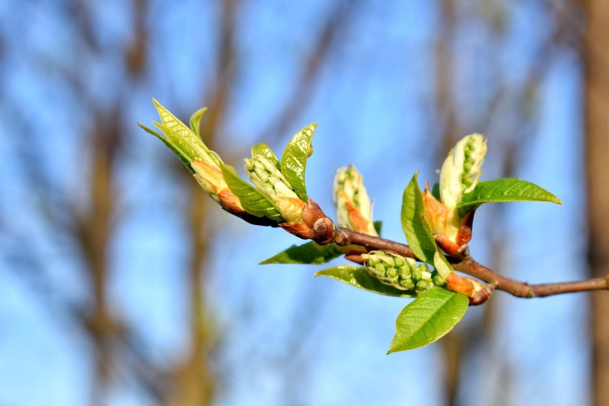 First leaves 🌱 Growth Plant Nature Leaf Green Color Focus On Foreground Beauty In Nature No People Day Close-up Fragility Outdoors Freshness Flower Flower Head Growth Nature Photography Freshness First Leaves Beautiful Nature