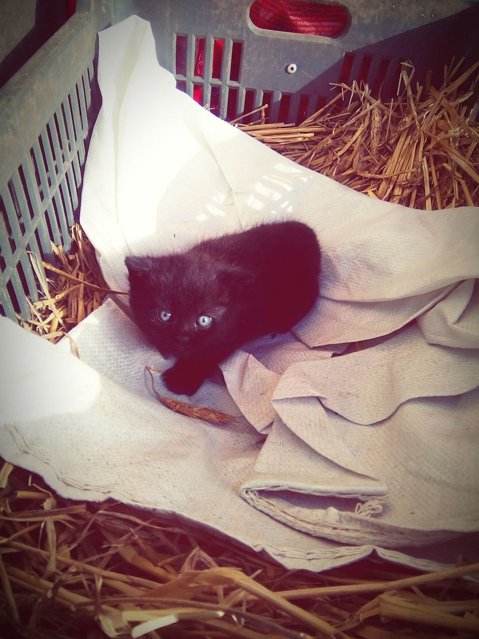 Ahogy visszaértünk, ez fogadott: :) :) :) öröm és Boldogság Babycat