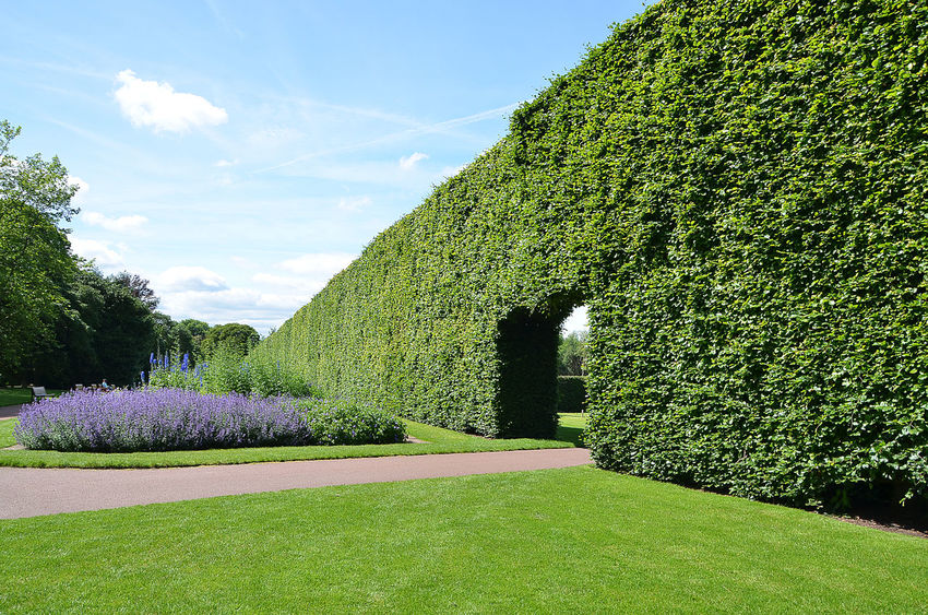 Botanical Gardens Garden Garden Photography Hedge Hedgerow Path Pathway Tranquil Scene Tranquility Tree Tunnel Tunnel