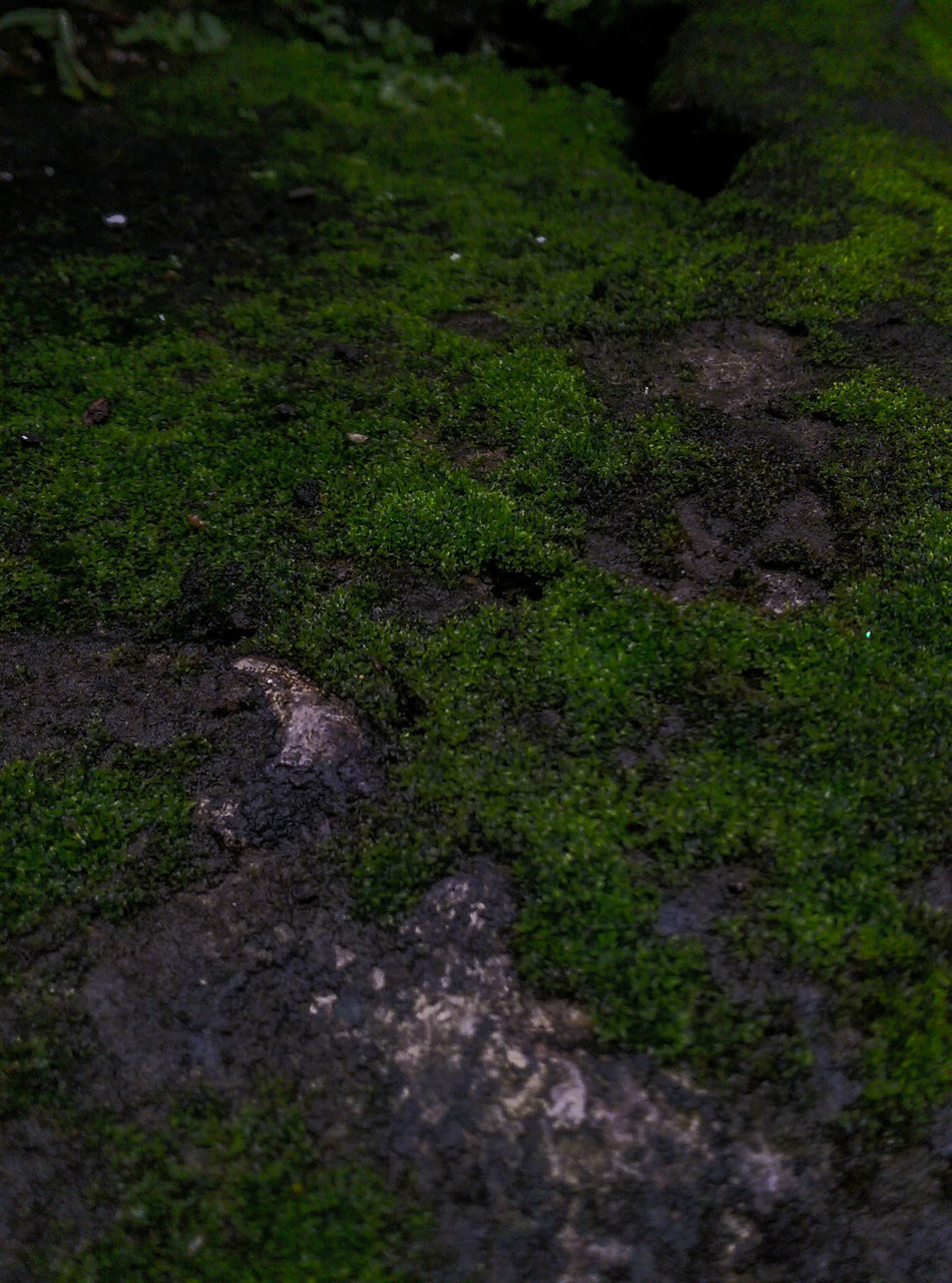 day, nature, outdoors, road, no people, high angle view, green color, field, tranquility, the way forward, grass, growth, puddle, beauty in nature, close-up, animal themes