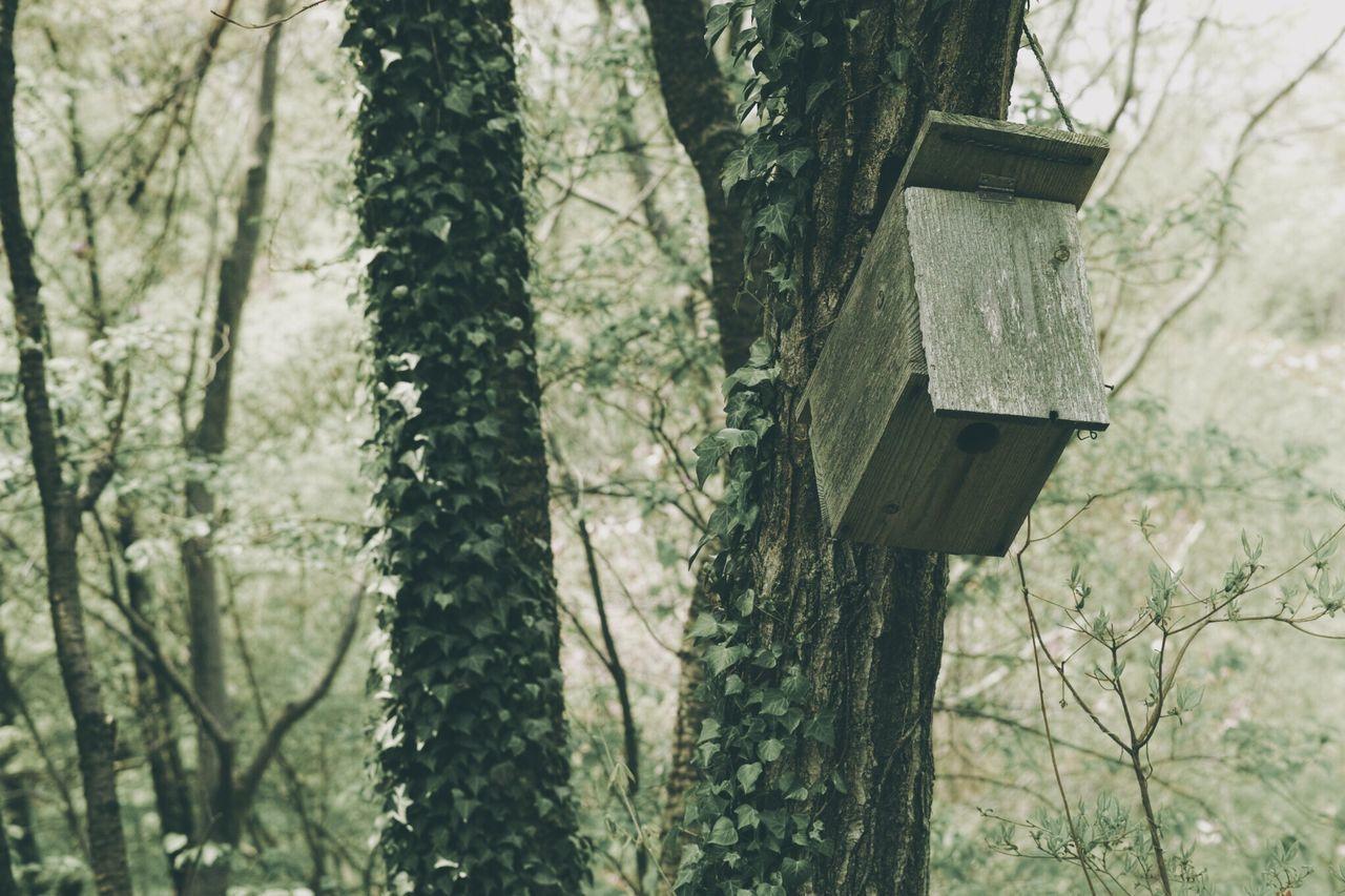 Beautiful stock photos of box, Bird, Box, Feeder, Forest