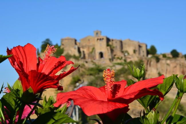 Civita Di Bagnoregio Italy🇮🇹 Flowers Flowers Of Red The City That Dies Focus Object