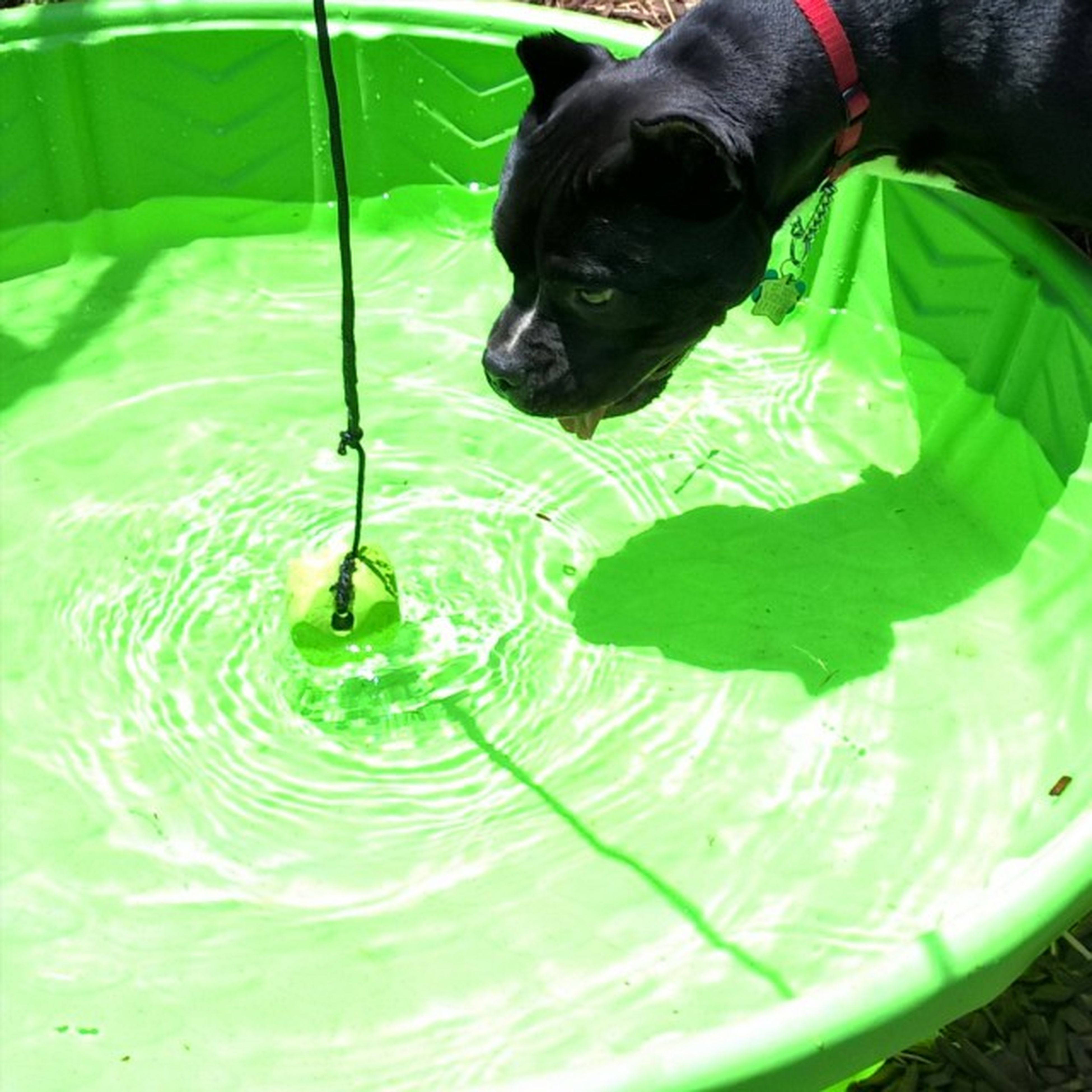water, one animal, green color, pets, animal themes, close-up, dog, domestic animals, high angle view, freshness, indoors, wet, leaf, part of, no people, reflection, refreshment, drop, mammal, day