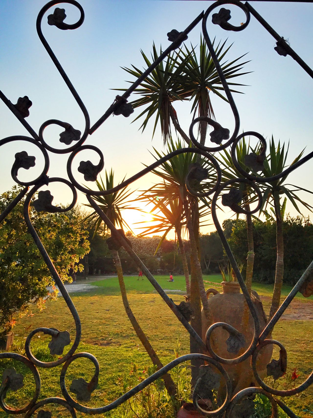 Teatro Greco - Siracusa Beauty In Nature Tranquil Scene Tranquility Metal Tree Palm Tree Outdoors No People Growth Nature Wrought Iron Day Grass Beauty In Nature Sky Close-up Sun Sunset Sunlight Sunset_collection Sunset Silhouettes Sunny Day Sunny Sun_collection
