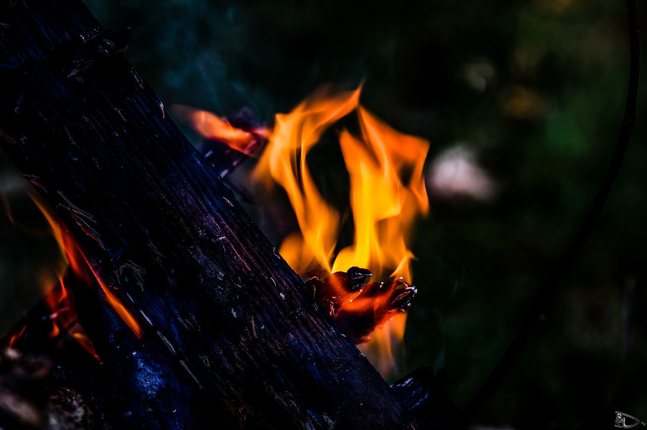flame, burning, heat - temperature, orange color, night, close-up, wood - material, no people, focus on foreground, outdoors, nature, bonfire, tree