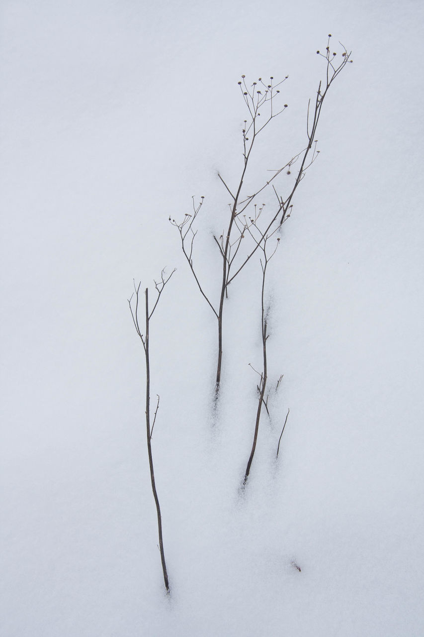 Bare Tree Branch In Snow