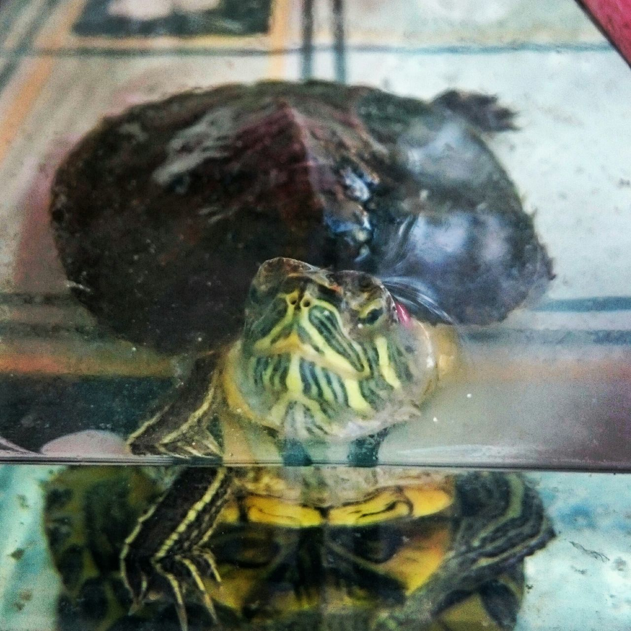 Kaplumbaga