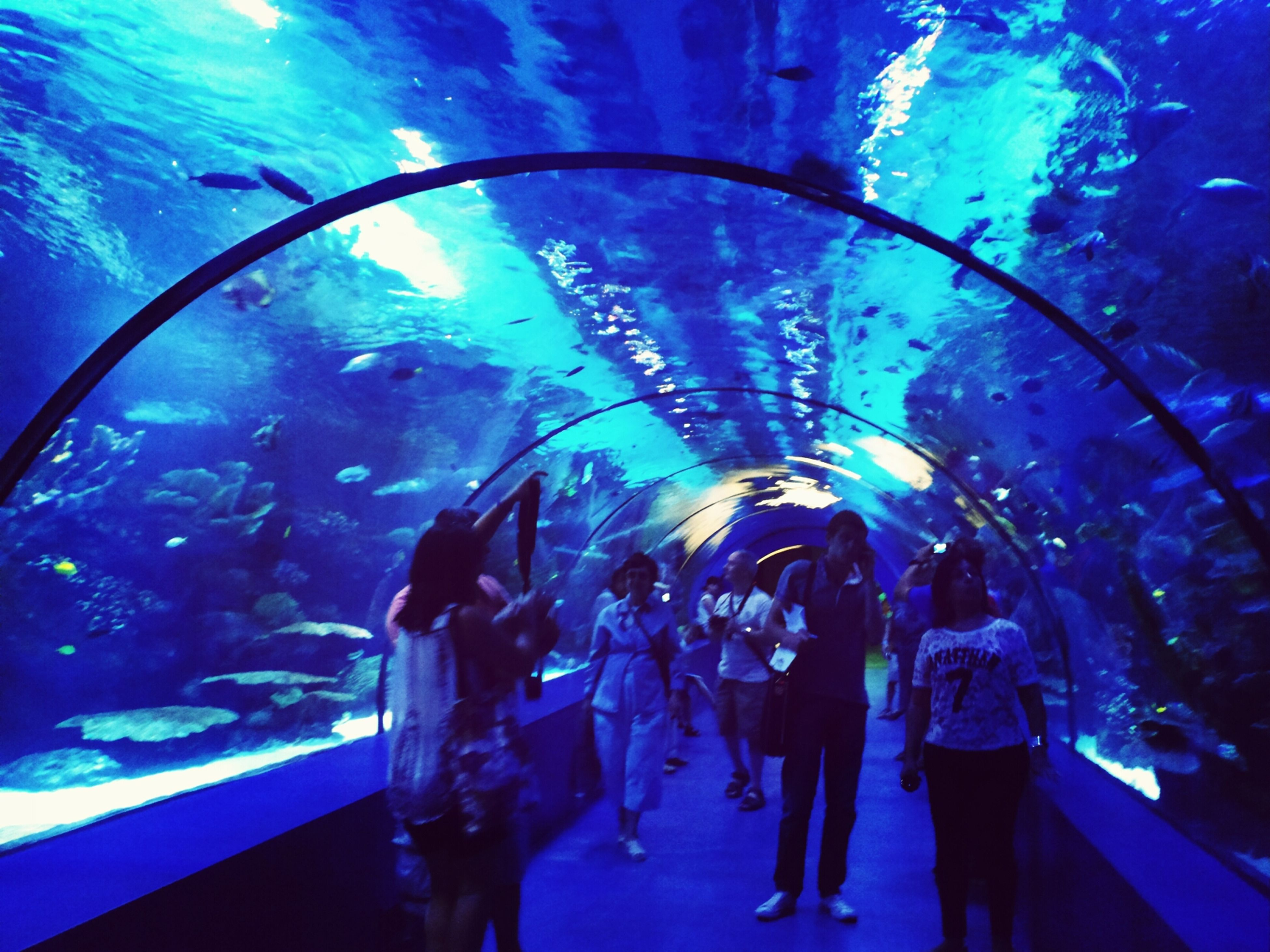 men, leisure activity, blue, lifestyles, water, underwater, large group of people, indoors, transparent, swimming, enjoyment, fish, person, fun, glass - material, arts culture and entertainment, togetherness, medium group of people, sea life