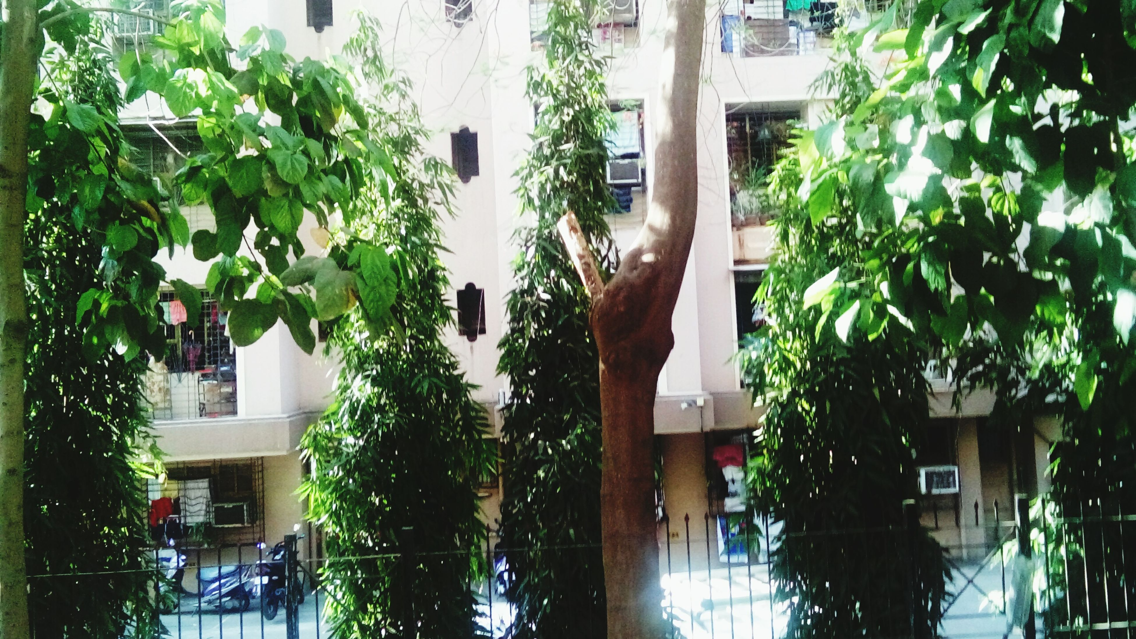 building exterior, architecture, built structure, tree, growth, house, window, residential building, residential structure, branch, low angle view, plant, balcony, building, leaf, potted plant, nature, day, no people, outdoors