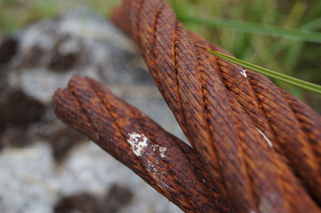 rusty, close-up, outdoors, focus on foreground, day, textured, no people, brown, nature