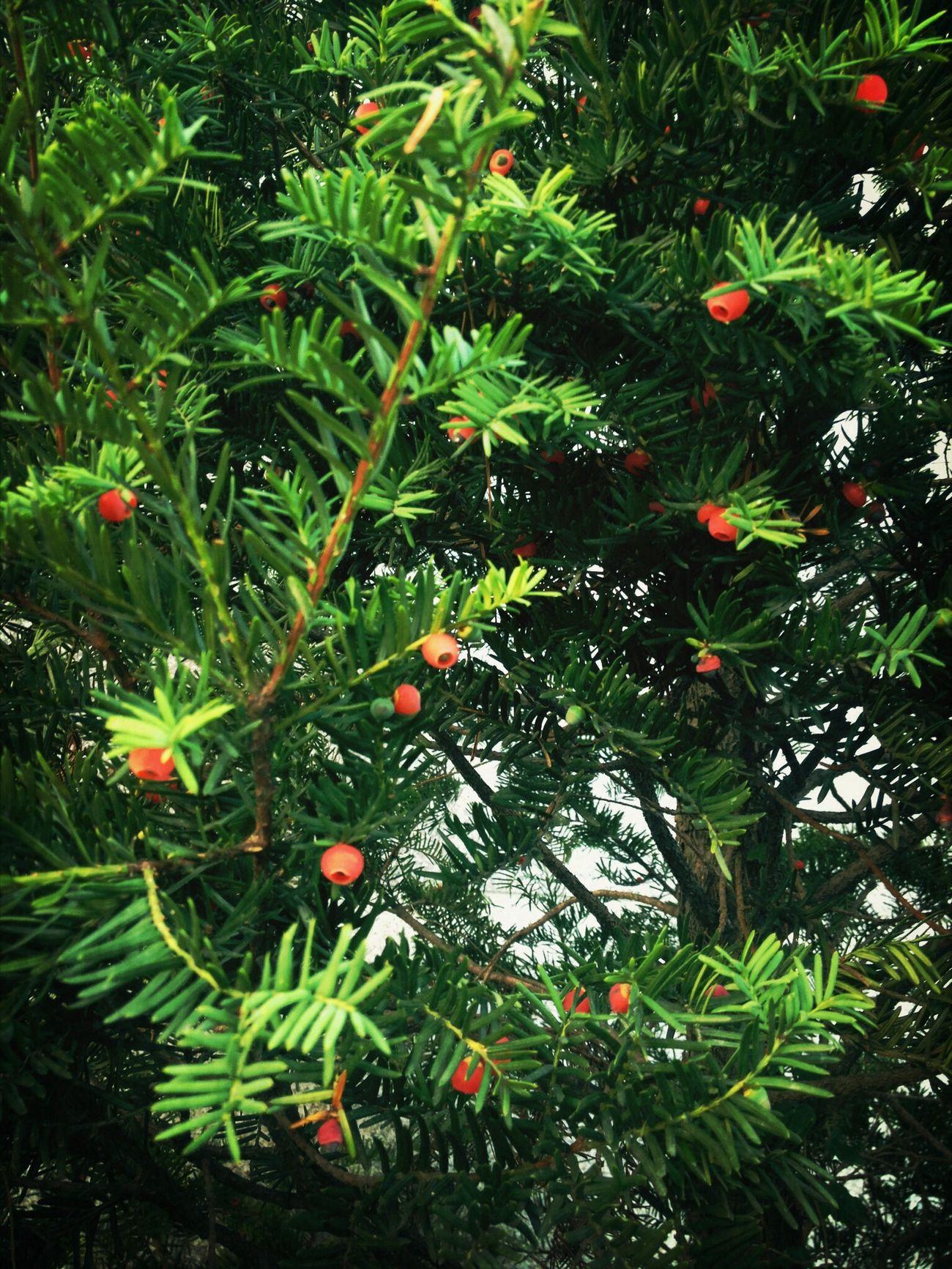 its looks like Christmas Tree ~