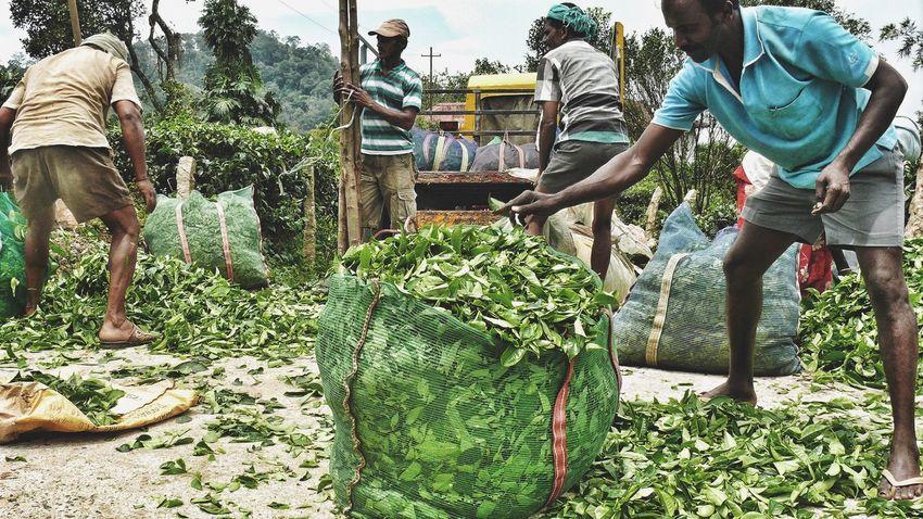 Teaestate TeaLeaves Estate Tea Munnar Kerala Hardwork Daily Life The Week On EyeEm