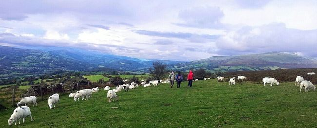 walking around Sugar Loaf in the Black MountainsSheep Walking EyeEm Nature Lover Eye4photography  Landscape_Collection Landscape Mountains Wales