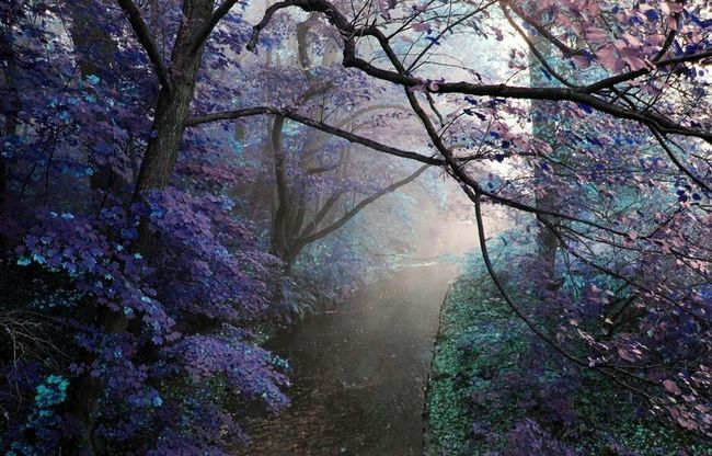 Misterious River View Foggy Purple Awesome Nature Immortalize The Moment
