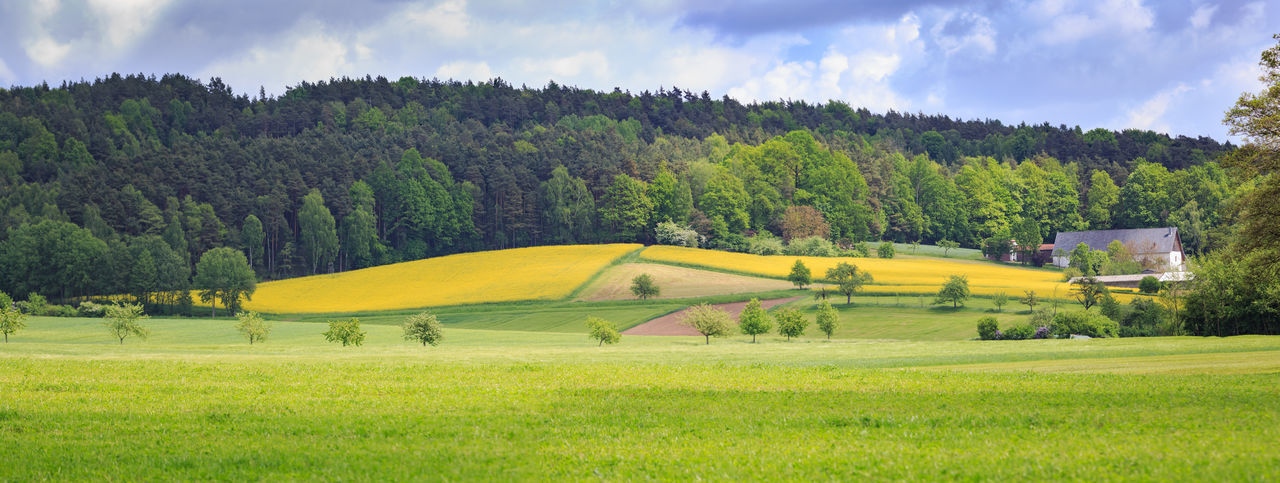 the rural lansdscape in spring near Coburg in Germany Agriculture, Background, Corn, Day, Europe, European, Farm, Farming, Farmland, Field, Fields, Forest, Germany, Grass, Green, Growth, Hiking, Hill, Land, Landscape, Meadow, Nature, Outdoor, Outdoors, Pasture, Plant, Rural, Scene, Sky, Spring, Summer, Sunli Beauty In Nature Cloud - Sky Day Field Golf Course Grass Green Color Growth Landscape Nature No People Outdoors Scenics Sky Tranquility Tree Yellow