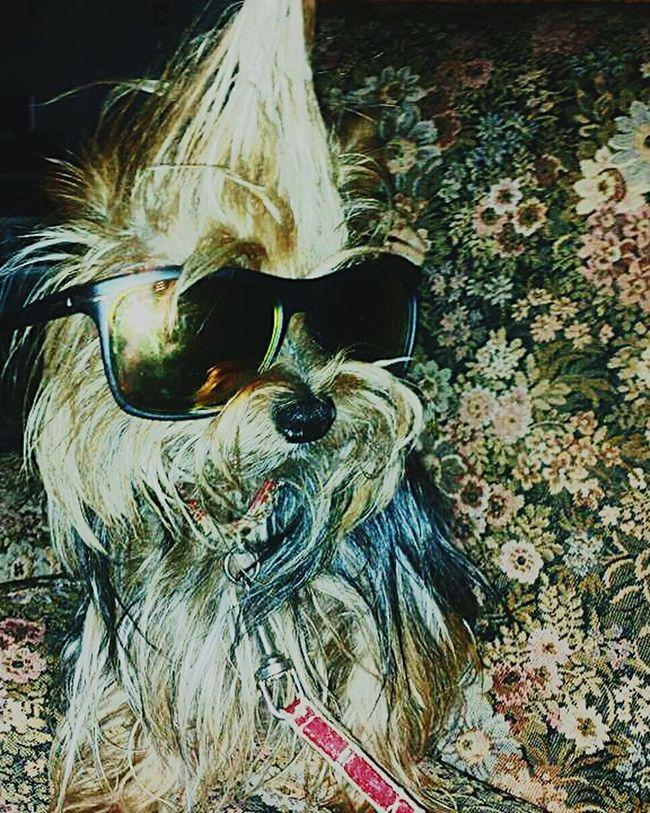I Love My Dog Summer Dogs