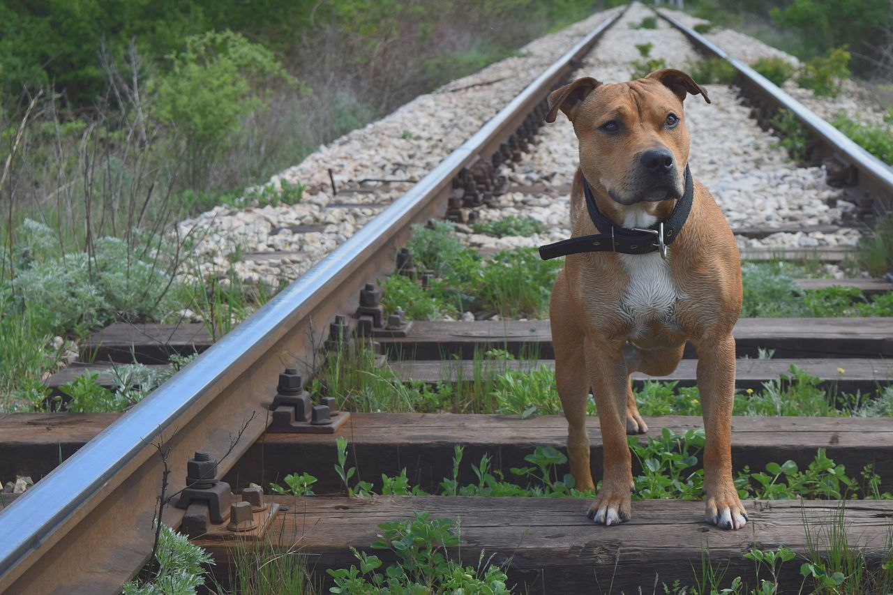 Dog Pitbull My Dogs Are Cooler Than Your Kids Summer Dogs Pets Corner Getting Inspired Check This Out Pet Photography  Pet Pet Love Things I Like