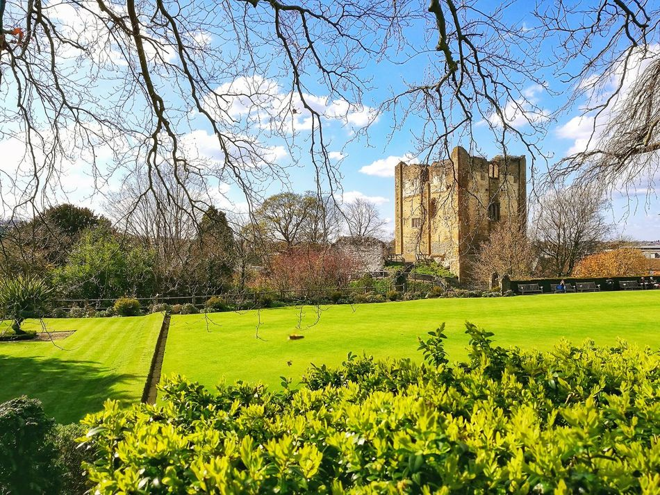 Sky Nature Grass No People Day Flower Beauty In Nature Outdoors Clear Sky Green Color Architecture Guildford Castle Castle