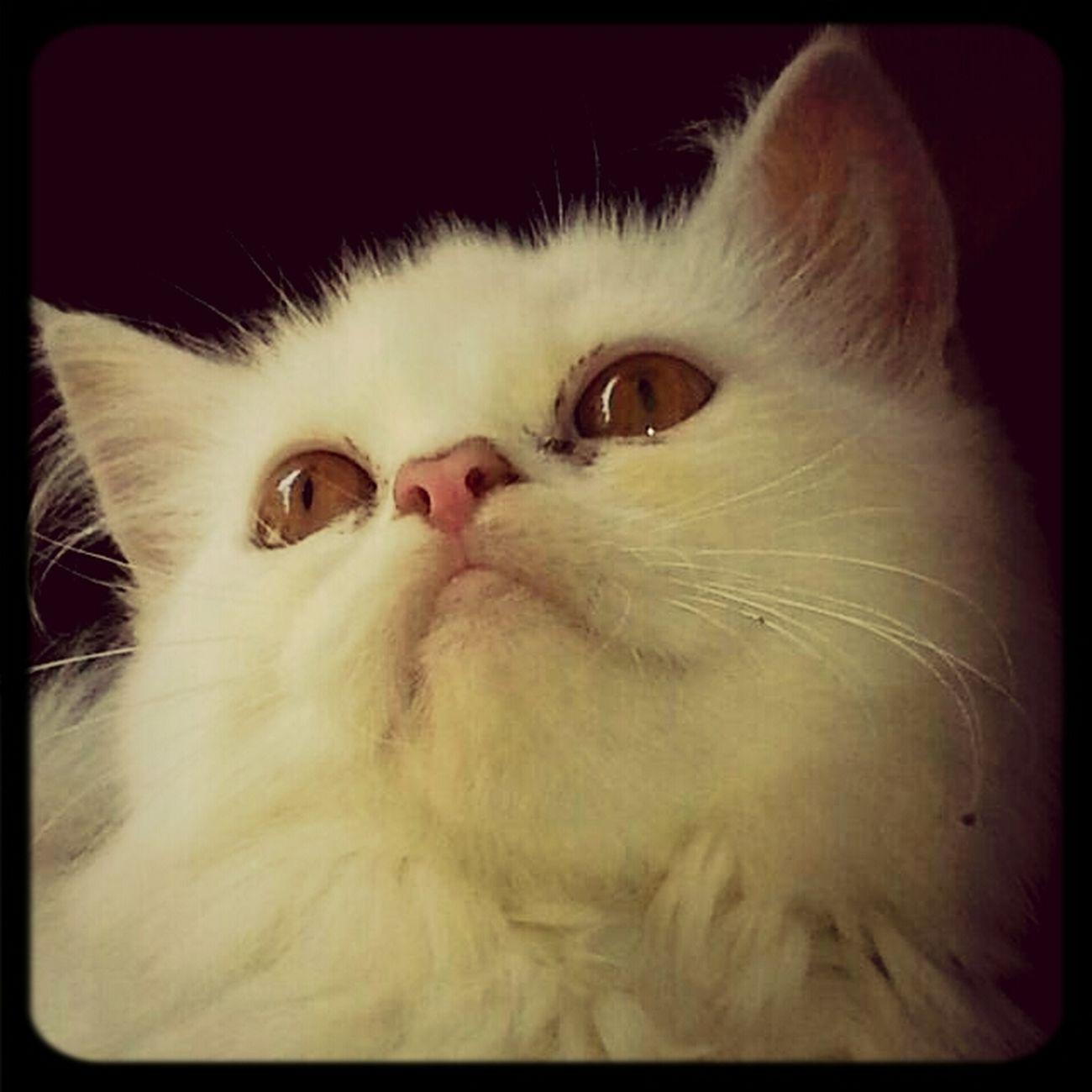 My cat Maxwell.......😘😙