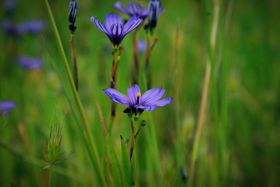 flowers, purple, tiny