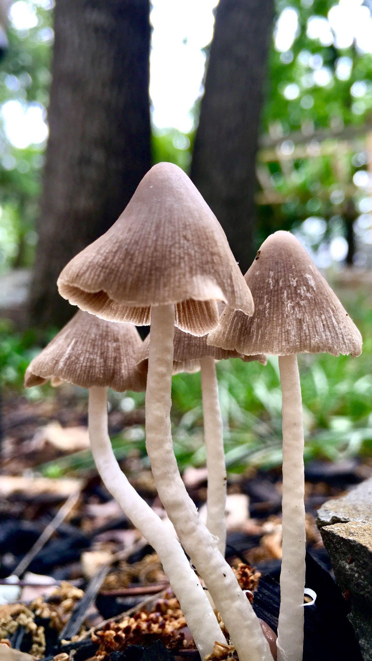 Bloom Mushroom Umbrella Silence After Rain
