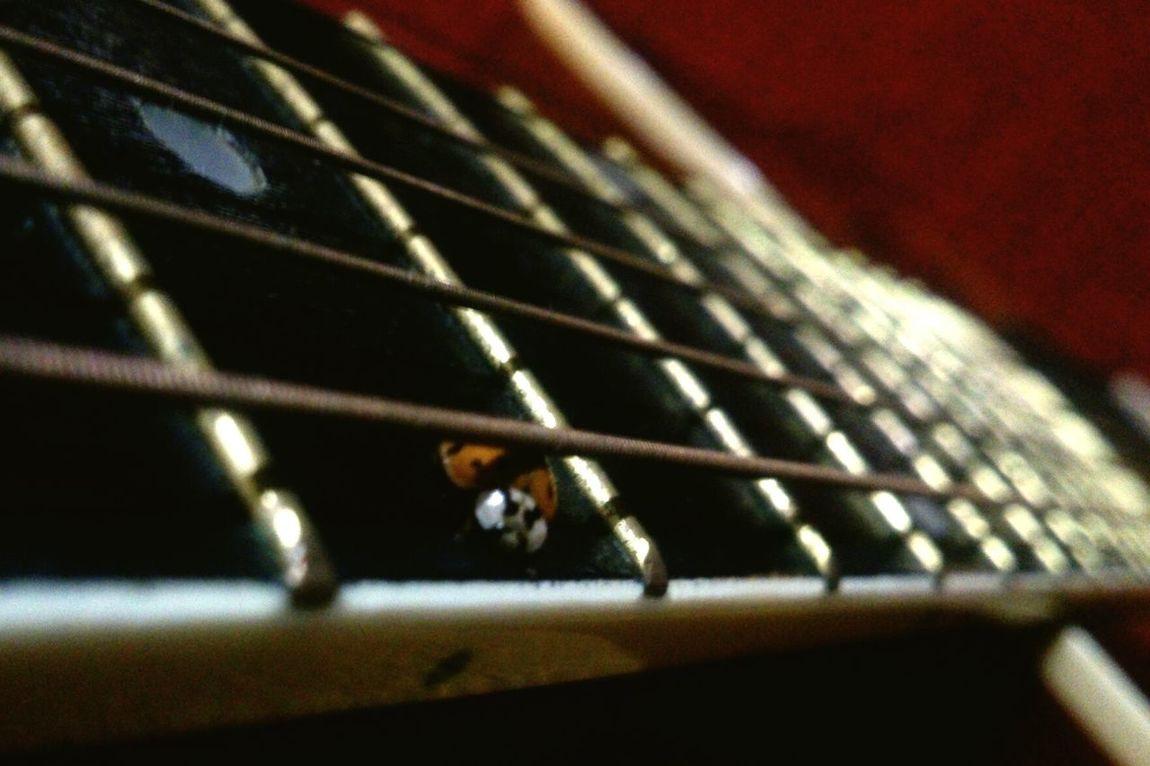 Who is there? :) - Ladybug Guitar божьякоровка гитара струны Bug