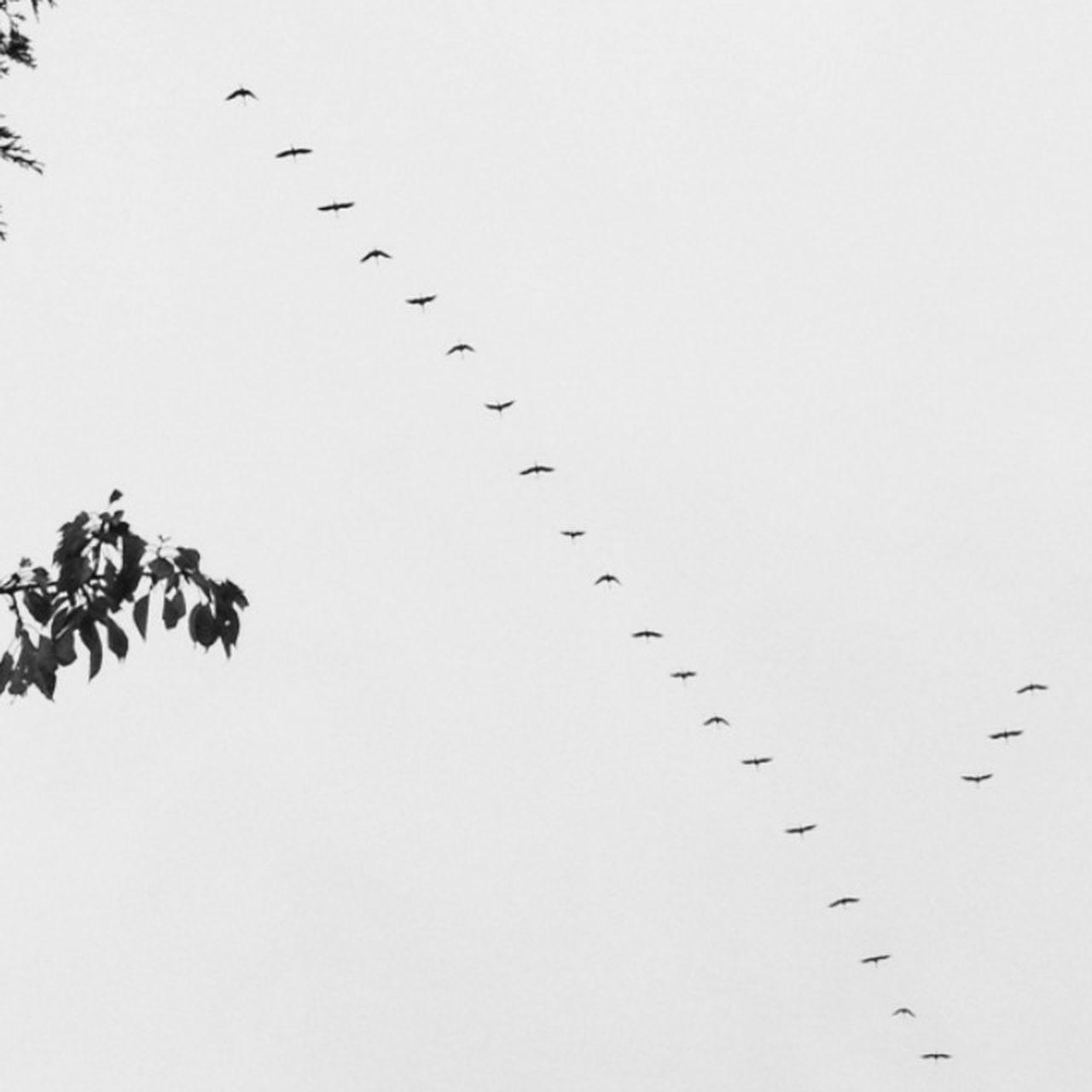 Fly away Goodbye Saying Goodbye Fly Away Autumn