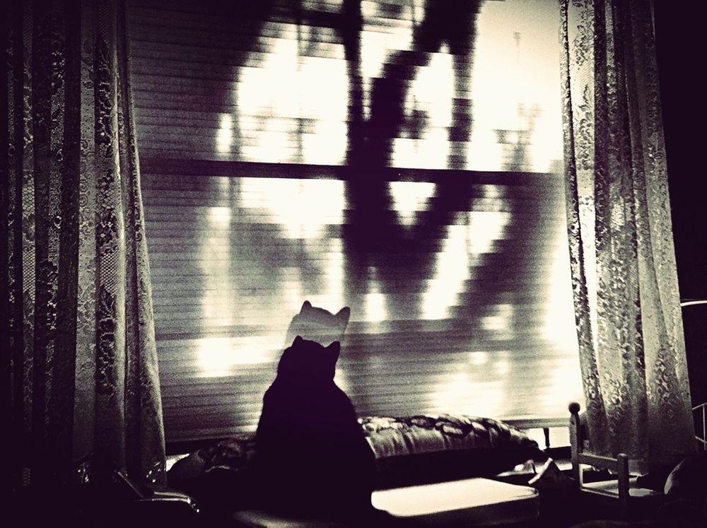 Cat Light And Shadow Moodjunky Aldofoto_bw