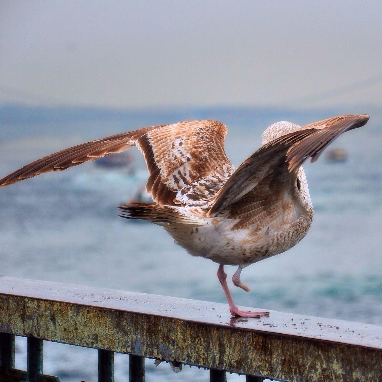 Rear View Of A Bird Against Calm Sea