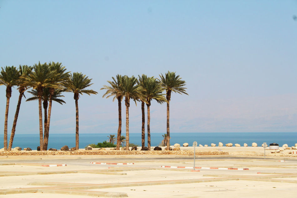 Beach Beauty In Nature Blue Clear Sky Coastline Day Growth Horizon Over Water Idyllic Nature Palm Tree Scenics Sea Shore Sky Summer Tourism Tourist Tranquil Scene Tranquility Travel Destinations Tree Tropical Climate Vacations Water