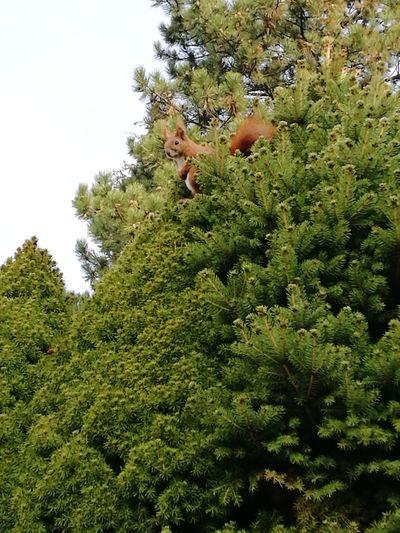 Besuch Eichhörnchen Sqirrel Frühling