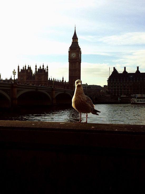 Strange Model Bigben River Thames Seagull Different Unusual Model Modello Insólito Gabbiano Tamigi Londra London ❤️