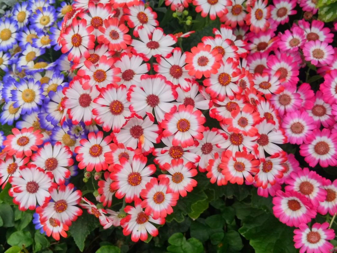 https://vimeo.com/132296801 😃💚💗💜💛❤😃 We must learn to live together as brothers or perish together as fools. 😃💚💗💜💛❤😃 Flower Keep It On Peace ✌ Fragility Freshness Beauty In Nature Nature Growth Full Frame Flower Head Plant Backgrounds Close-up Nature's Diversities Thought Of The Day Women Who Inspire You Good Morning World! Hamilton, New Zealand Spring In New Zealand Lush Foliage Through My Eyes Film Purple Color Same But Different Keep It On