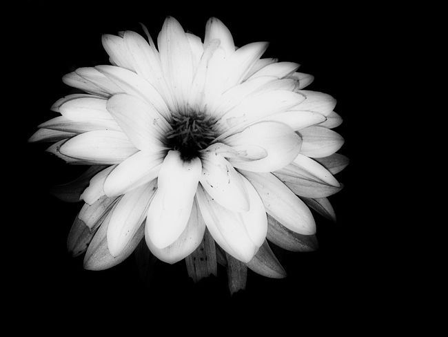 White Flower Black & White Hi! Flowers Hello World Taking Photos Check This Out Playing With Pictures. Relaxing Cheese!