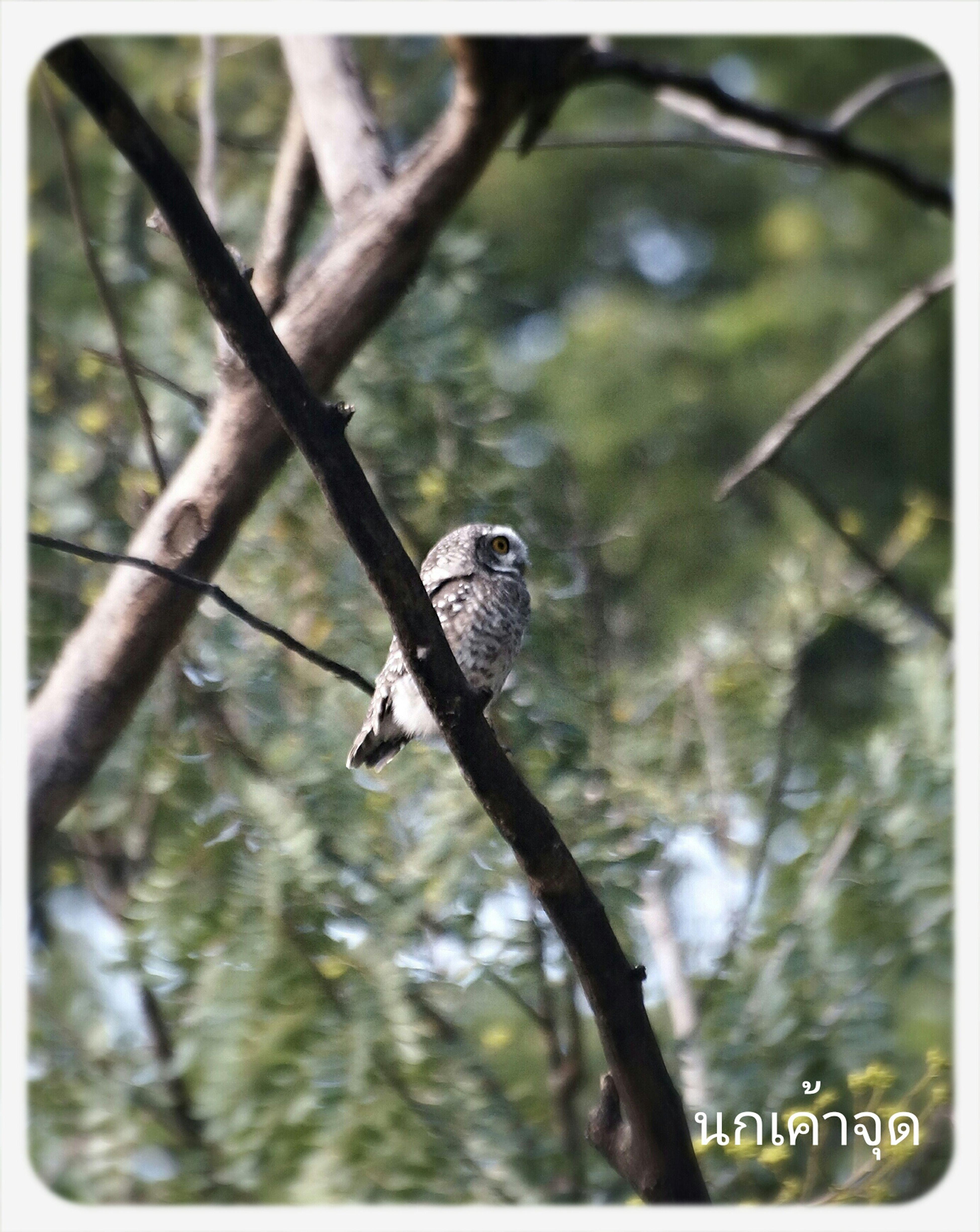nachapol photo Owl Taking Photos Bird Photography Birds_collection