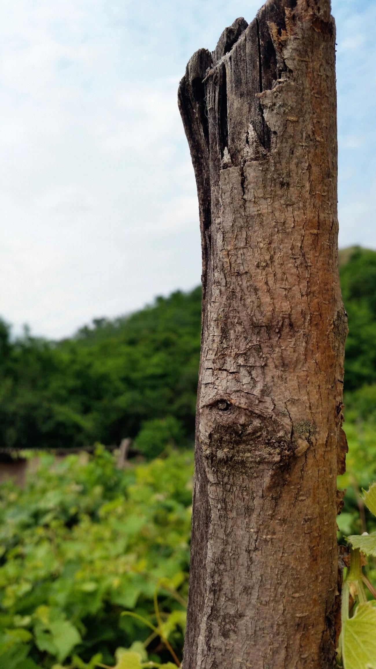 Macro Nature Tree Texture