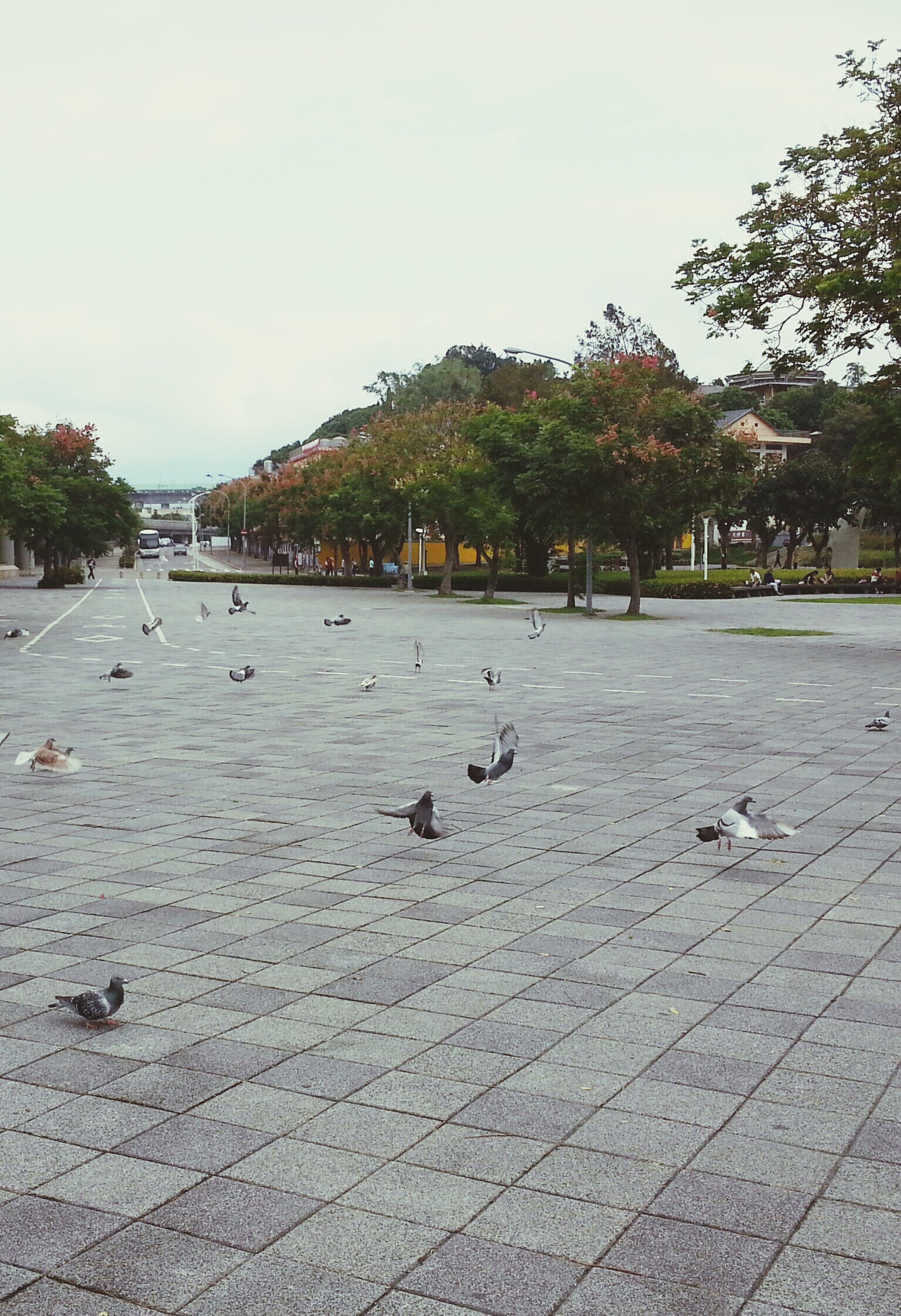Pigeons Doves GoToWork At The Park Commuting 鴿子 圓山 Mrt 花博 起飛